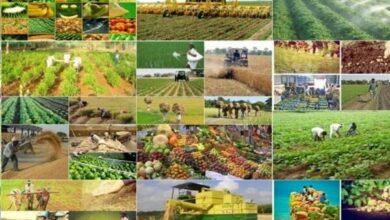محصولات کشاورزی جنوب کرمان