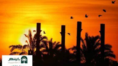 عکس طلوع آفتاب بم شعر و غزلی از محمدعلی جوشایی شاعر باغشهر بم